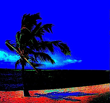 palm tree, shadow
