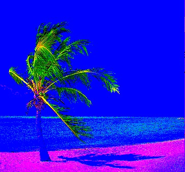 palm tree, shadow2