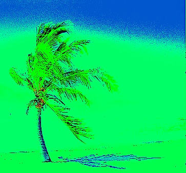 palm tree, shadow4