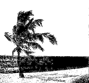 palm tree, shadow5